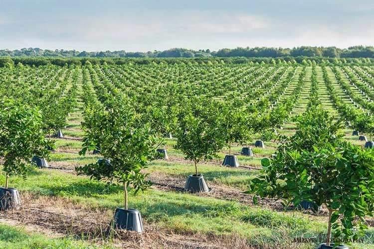 Tree T-PEE: un invento que reduce un 90% la necesidad de agua y fertilizantes 3