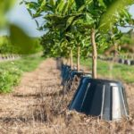 Tree T-PEE: un invento que reduce un 90% la necesidad de agua y fertilizantes