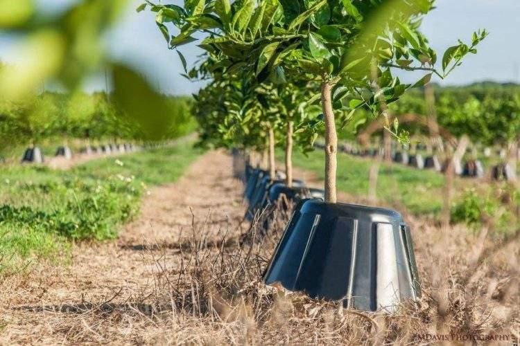 Tree T-PEE: un invento que reduce un 90% la necesidad de agua y fertilizantes 1