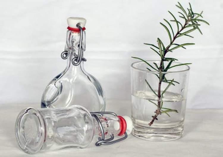 10 plantas aromáticas que puedes cultivar en agua y los consejos clave para que sobrevivan en ella 4