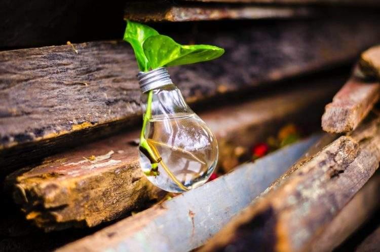 10 plantas aromáticas que puedes cultivar en agua y los consejos clave para que sobrevivan en ella 2