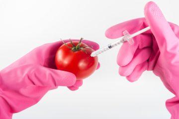 Qué diferencia a las semillas tradicionales, híbridas y transgénicas y por qué es tan importante 11