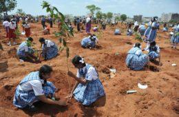 India bate un récord mundial: planta 50 millones de árboles en un día 6