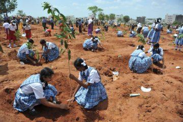 India bate un récord mundial: planta 50 millones de árboles en un día 12