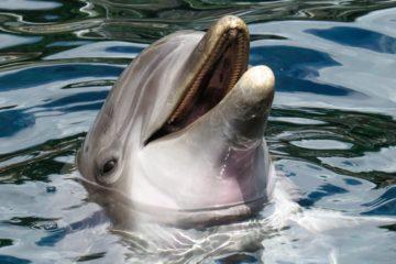 Esto es lo que hacen los delfines cuando se miran al espejo 6