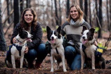 La historia de tres perros sembradores que ayudan a reforestar tras los incendios 6