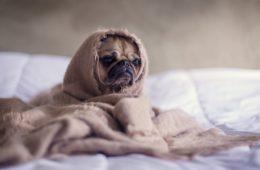 Si tu mascota hace este raro gesto debes llevarlo urgentemente al veterinario 12