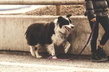 Multa de 750 euros a los dueños de perros que no limpien su orina con agua 8