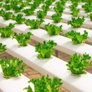 Peligro para nuestra salud: el mercado negro de los pesticidas agrícolas no deja de crecer 6
