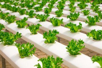 Peligro para nuestra salud: el mercado negro de los pesticidas agrícolas no deja de crecer 16