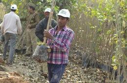 Estos son los proyectos de reforestación más extraordinarios realizados en nuestro planeta 2