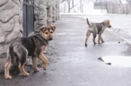 Nueva hazaña animalista en Holanda: consigue ser el primer país sin perros callejeros 12