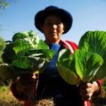 Bolivia alcanza la autosuficiencia alimentaria. ¿Lo celebramos?
