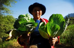 Bolivia alcanza la autosuficiencia alimentaria. ¿Lo celebramos? 14