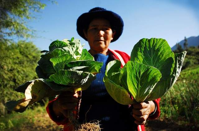 Bolivia alcanza la autosuficiencia alimentaria. ¿Lo celebramos? 2