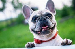 Esta enfermedad genética tiene la culpa de que los perros sean tan cariñosos 18