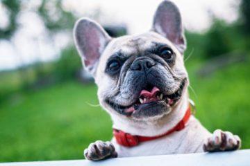 Esta enfermedad genética tiene la culpa de que los perros sean tan cariñosos 6