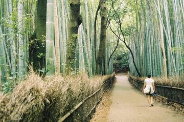 Shinrin-yoku o la medicina japonesa de pasear por el bosque 6