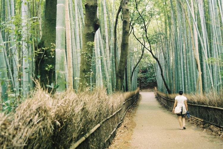 Shinrin-yoku o la medicina japonesa de pasear por el bosque 1