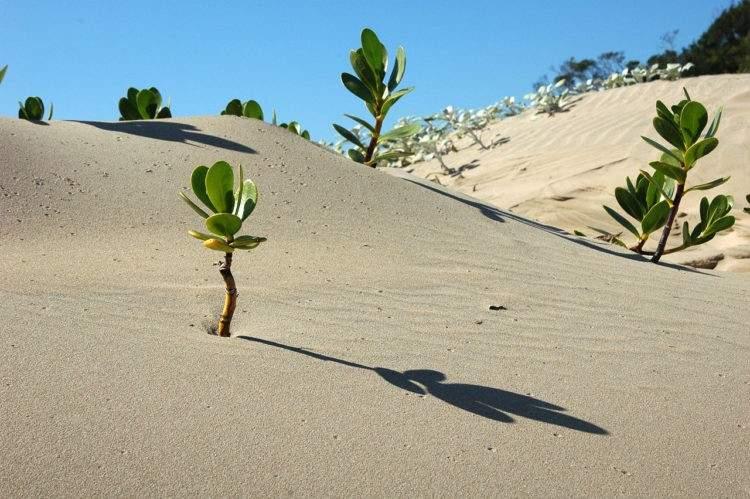 14 países africanos se unen para plantar una gran muralla verde en el Sahara 2