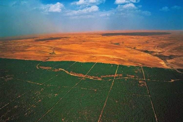 14 países africanos se unen para plantar una gran muralla verde en el Sahara 3