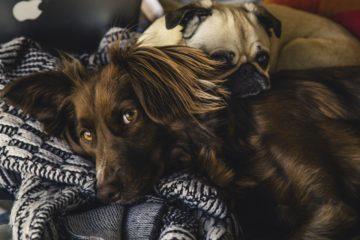 Conceden una baja laboral a una mujer para que pueda cuidar a su perro enfermo 17
