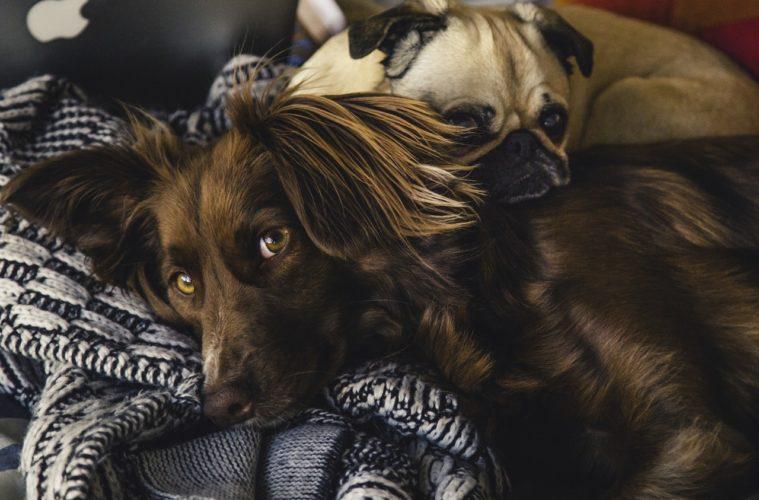 Conceden una baja laboral a una mujer para que pueda cuidar a su perro enfermo 2
