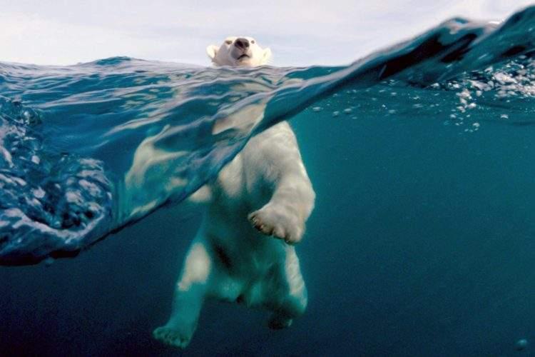 La NASA nos advierte: así se inundará el planeta con el deshielo de glaciares 2