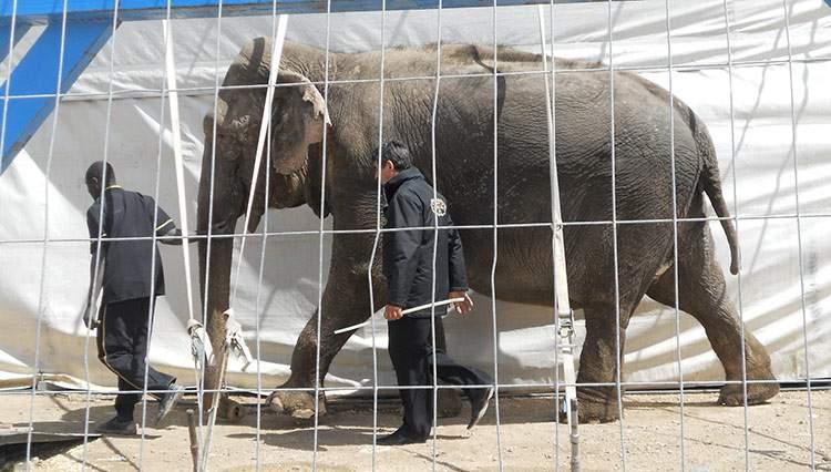 Italia se convierte en el 41º país en prohibir los circos con animales 1