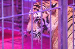 Italia se convierte en el 41º país en prohibir los circos con animales 10