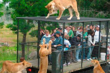 Este es el zoológico que enjaula a los humanos en vez de a los animales 12