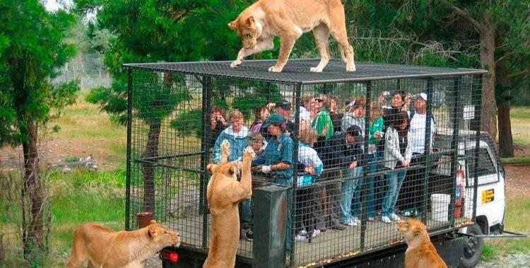 Este es el zoológico que enjaula a los humanos en vez de a los animales 2