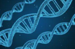 Comer frutas y verduras puede transformar nuestro ADN 18