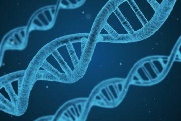 Comer frutas y verduras puede transformar nuestro ADN 11