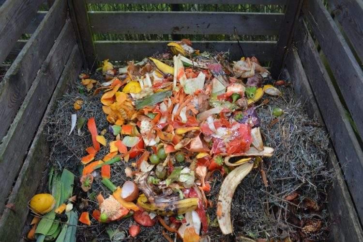 El contenedor marrón para residuos orgánicos ya está en Madrid, ¿deberíamos hacerlo el resto de ciudades? 5
