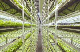 Así es el nuevo sistema de cultivo vertical financiado por IKEA 12