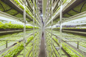 Así es el nuevo sistema de cultivo vertical financiado por IKEA 11