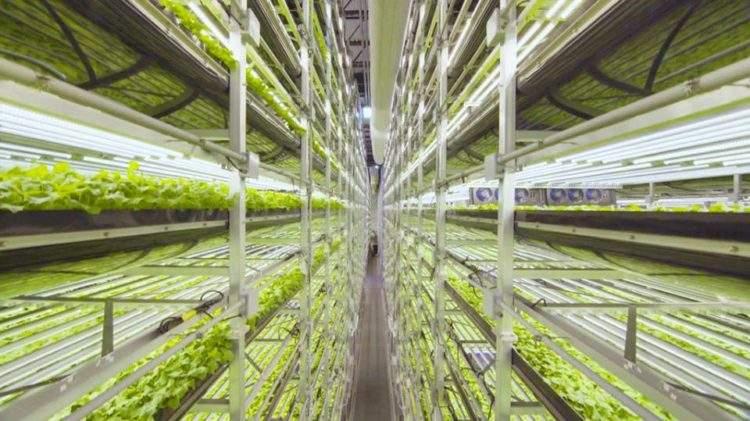 Así es el nuevo sistema de cultivo vertical financiado por IKEA 1