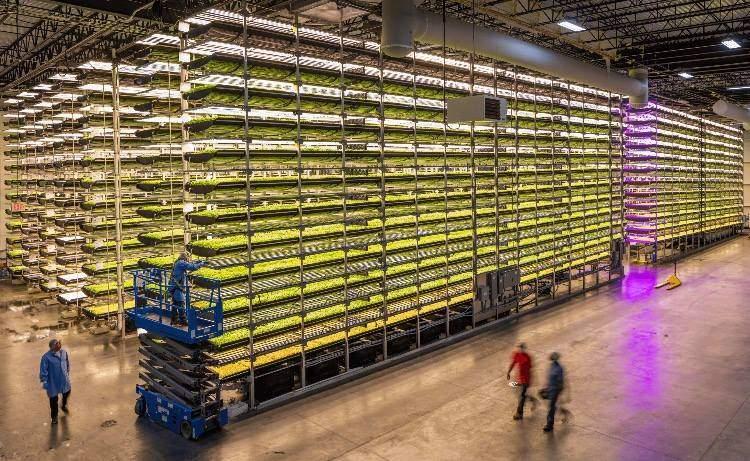 Así es el nuevo sistema de cultivo vertical financiado por IKEA 2
