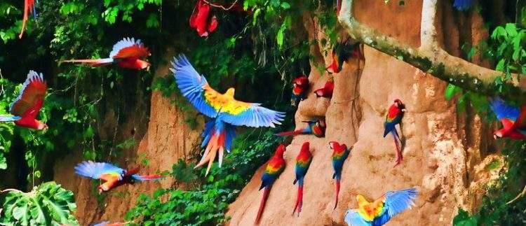Perú aprueba una ley que permitirá llenar de carreteras la selva amazónica 2