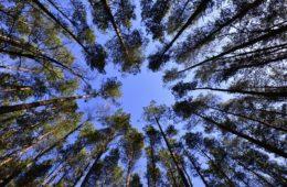 Así es cómo los árboles sienten timidez 4