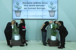 Ikea muestra qué le sucede a una planta que sufre bullying frente a otra que recibe mensajes cariñosos 10