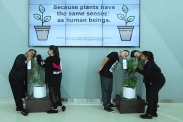 Ikea muestra qué le sucede a una planta que sufre bullying frente a otra que recibe mensajes cariñosos 4