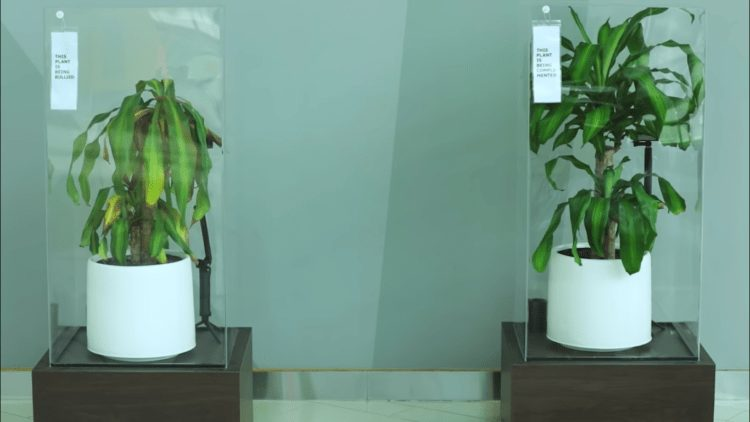 Ikea muestra qué le sucede a una planta que sufre bullying frente a otra que recibe mensajes cariñosos 1