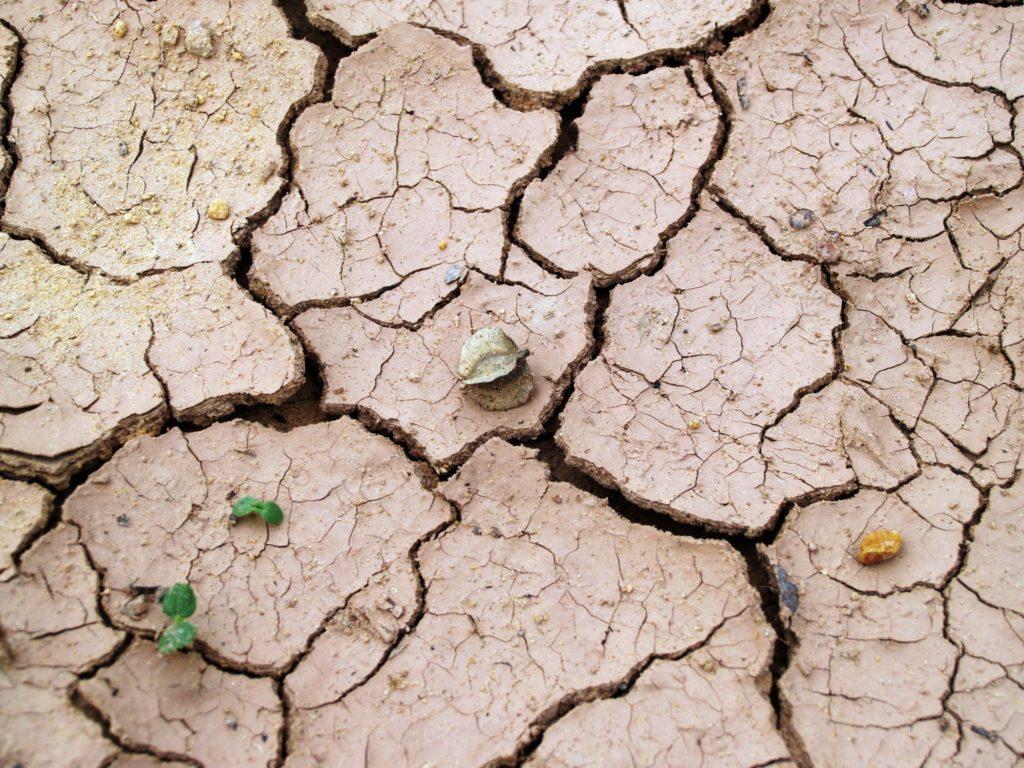 La técnica de arcilla húmeda que transforma los desiertos en tierra fértil 1