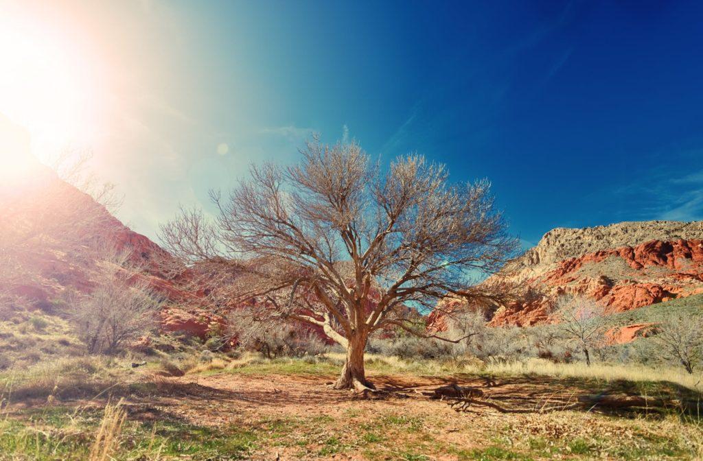La técnica de arcilla húmeda que transforma los desiertos en tierra fértil 3