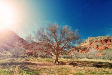 La técnica de arcilla húmeda que transforma los desiertos en tierra fértil 9