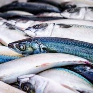 mercurio-peces