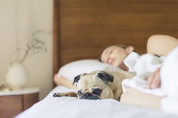 ¿Sabes por qué la muerte de tu mascota puede ser más dolorosa que la de un ser humano? 12