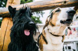 Los perros y el mito de la edad: un año perruno no equivale a siete en humanos. Esta es la verdad 14